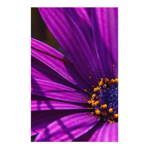 Magenta: The African Daisy Stationery