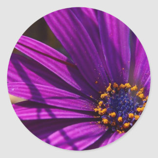 Magenta: The African Daisy Stickers