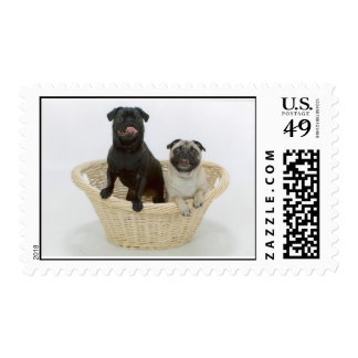 Maggie and Maxwell Postage