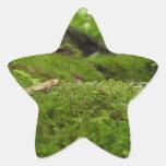 Magia cubierta de musgo pegatina forma de estrella