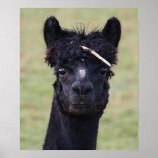 Magia de la alpaca poster