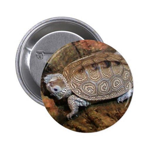 Magia de la tortuga pin