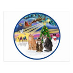 Magia de Navidad (r) - tres gatos (AmSH) Tarjetas Postales