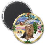 Magia de Navidad (w) - Yorkshire Terrier Iman