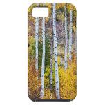 Magia del árbol de Aspen iPhone 5 Case-Mate Protector