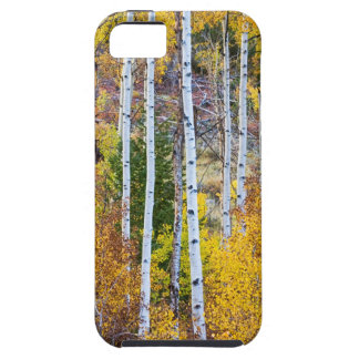 Magia del árbol de Aspen iPhone 5 Carcasas