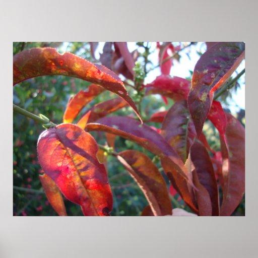 magia del otoño póster