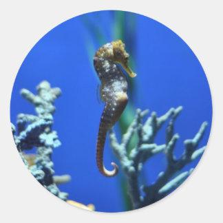 Magia del Seahorse Etiqueta Redonda