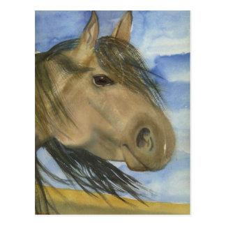 Magic, An American Mustang Postcard