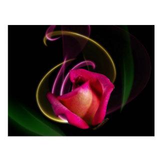 Magic Carousel Rose Postcards