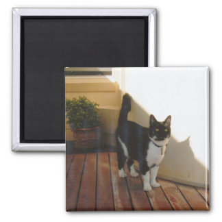 Magic Cat - Customized Magnets