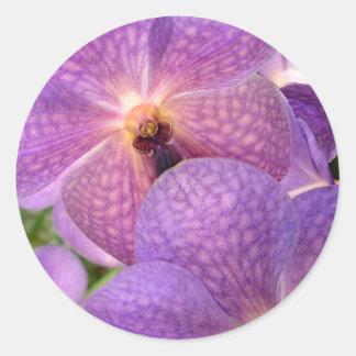 """""""Magic"""" Exotic Violet Orchids Design Classic Round Sticker"""