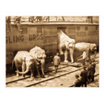 Magic Lantern Slide Ringling Bros Elephant Train Postcard