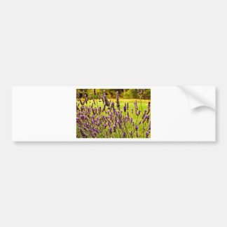 Magic Lavender Bumper Sticker