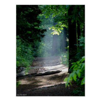 Magic Morning Light on the Forest Trail Poster