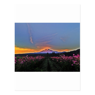 Magic Mountain Moment Postcard