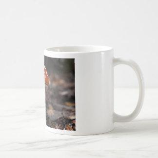 Magic Mushroom Mugs
