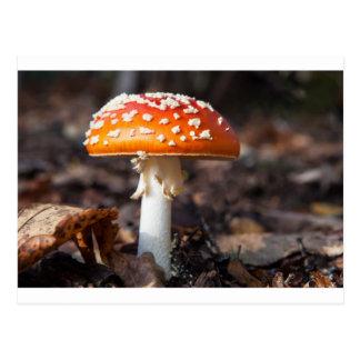 Magic Mushroom Postcard