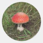 Magic Mushroom Sticker