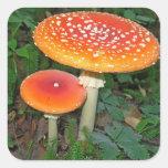 Magic Mushrooms Square Sticker