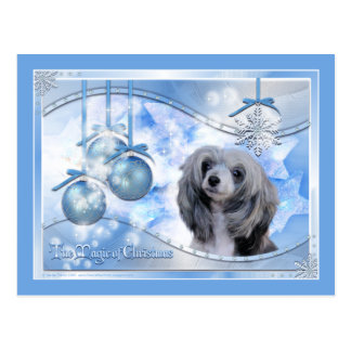 Magic of Christmas Chinese Crested Postcard