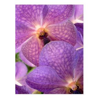 Magic Pale Violet Orchids Postcard