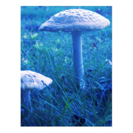 Magic Shroom In Blue Post Card