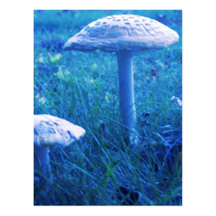 Magic Shroom In Blue Postcard