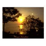 Magic Sunshine Postcard