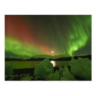 Magical Aurora Postcard