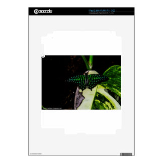 Magical Green Spotted Butterfly iPad 2 Decals