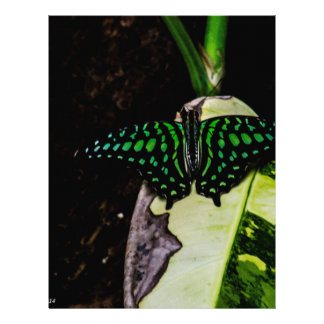 Magical Green Spotted Butterfly Letterhead