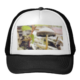 Magical Mushroom Trucker Hat