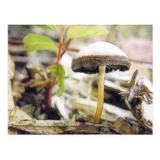 Magical Mushroom Postcard