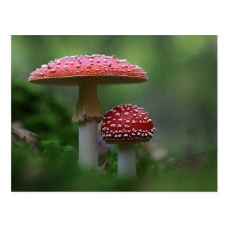 Magical Mushrooms Postcard