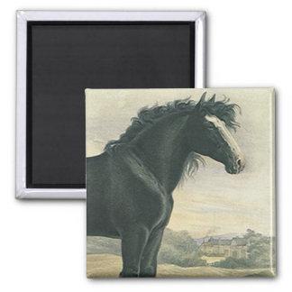 MAGNET Antique Art Draft Old English Black Horse