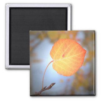 Magnet-Aspen Leaf 2 Inch Square Magnet