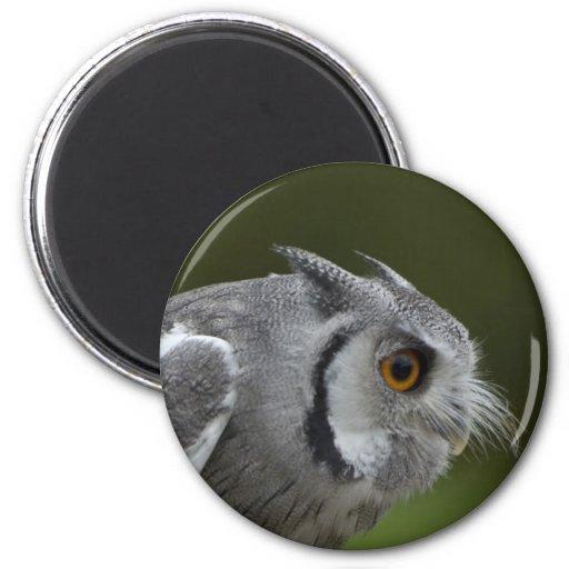 Magnet - Baby Grey Owl
