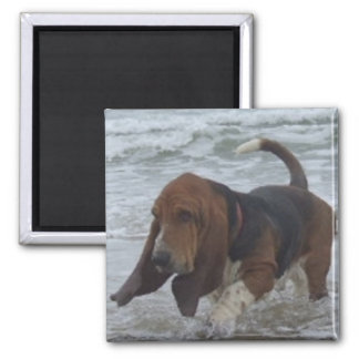 Magnet Basset Hound By The Sea