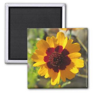 Magnet - Blanket Flower