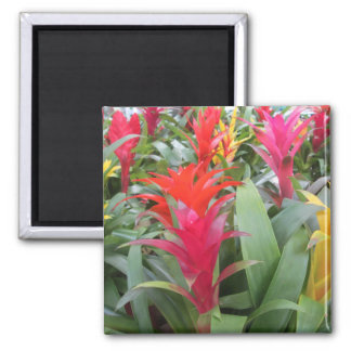 Magnet - Bromeliad Forest