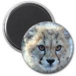 Magnet-cheetah-cub10x10 Imán De Nevera