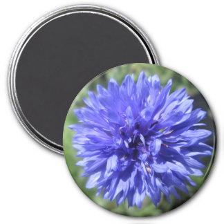 Magnet - Cornflower Blue Bachelor's Button