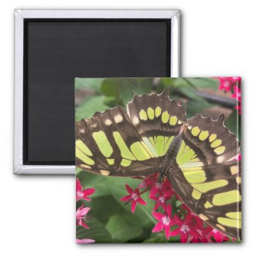 """Magnet Costa Rica Butterfly - 2.1"""" x 2"""""""