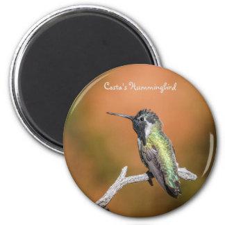 Magnet: Costa's Hummingbird #5 (Round) 2 Inch Round Magnet