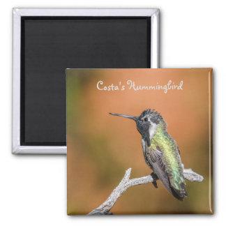 Magnet: Costa's Hummingbird #5 (Square) 2 Inch Square Magnet