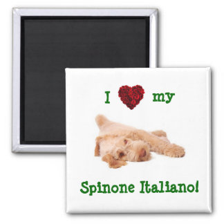 Magnet, featuring gorgeous Spinone puppy l 2 Inch Square Magnet