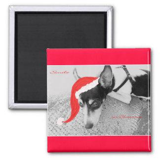 Magnet for Christmas, Rat Terrior