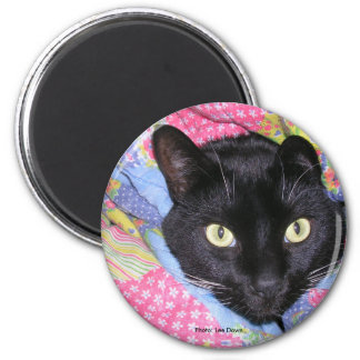 Magnet: Funny Cat wrapped in Blankets Magnet