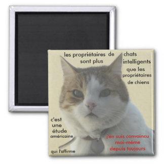 magnet gato
